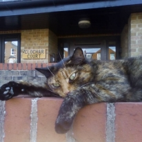 Peggy the security cat enjoying the sun at Clochar Court!