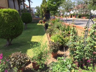 gardening competition 2019